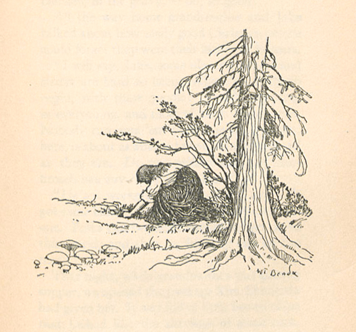 Image of 'gathering mushrooms'