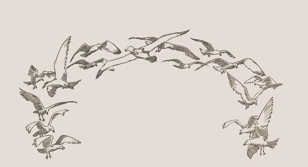 Drawing of gulls encirling the title material.